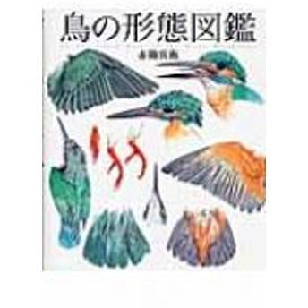 赤勘兵衛/鳥の形態図鑑