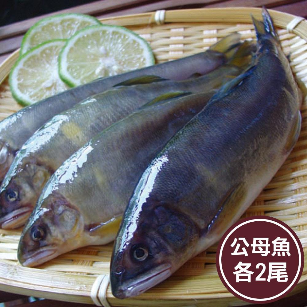 今日強檔 免運 新鮮市集 鮮美公母香魚綜合組(各2尾)