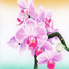 365日の誕生花の絵 (6切・額付) 3月31日