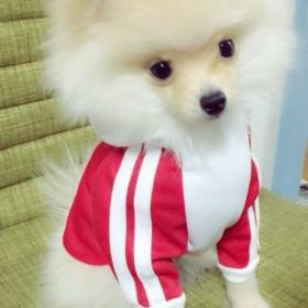 犬服!Sサイズ☆ジャージ レッド