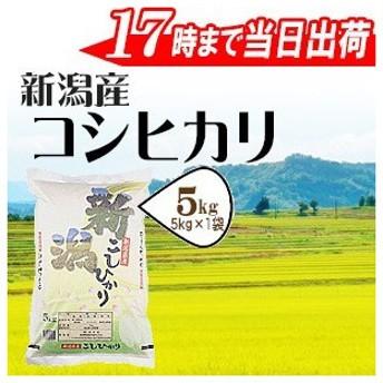 新米 令和元年産 お米 5kg 白米 新潟県産 コシヒカリ 5kg 当日出荷 特A評価 送料無料 (一部地域を除く)