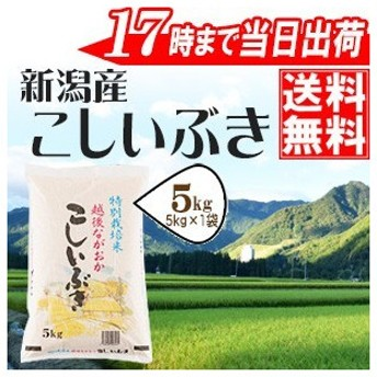 新米 令和元年産 お米 5kg 特別栽培米新潟県産こしいぶき5kg×1袋 当日出荷 送料無料(一部地域を除く)