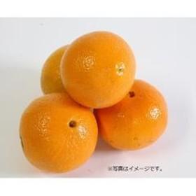 オレンジ 1コ アメリカ産