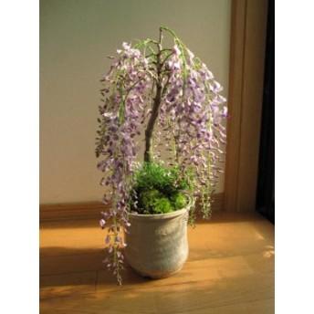 四月の贈り物に 藤盆栽 豪快で 可憐な 薄紫の藤が見る人の心を魅了します。 開花は四月頃に咲きます。