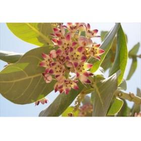 メキシコユカタン半島 カンクンの花のポストカードphoto by 渡辺貴之 ハガキはがき絵葉書postcard-