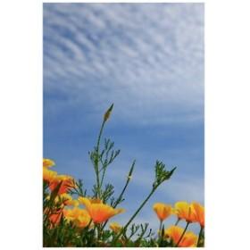ポストカード「黄色い花 春の花」フォトカード絵はがきハガキ葉書postcard