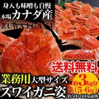 【送料無料】【業務用】ズワイガニ姿3kg分5~6尾身入り90%以上[ずわいがに蟹][味噌みそ]