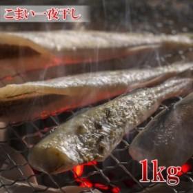 【北海道産 こまい一夜干し 1kg(45匹前後)】ビールのお供にぜひどうぞ 干物 【新鮮コマイ】【冷凍】