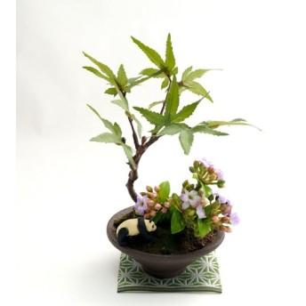 母の日に パープルカランコエとパンダのミニフェイク盆栽