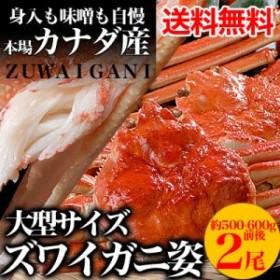 【送料無料】ズワイガニ姿約500g2尾[ずわいがに蟹][味噌みそ]カニ ボイル 冷凍