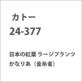 カトー 24-377 日本の紅葉 ラージプランツ かなりあ(金糸雀) カトー 24-377 ニホンノモミジ ラージプランツ カナリア【返品種別B】