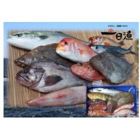 『おおだ一日漁』旬の鮮魚詰め合わせ