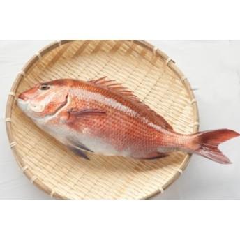 本場須崎のブランド鯛「乙女鯛フィーレセット」