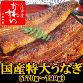 国産特大うなぎ蒲焼き 170g×1本【ウナギ 鰻 蒲焼き 蒲焼 国産 国内産】