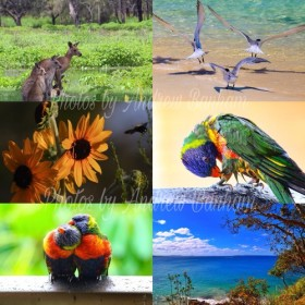 ポストカード(Australia postcard)6枚セット