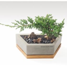 緑化木材パレット幾何学形状セメント花(小)
