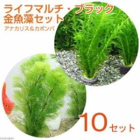 (水草)マルチリングブラック(黒) メダカ・金魚藻セット(10セット)