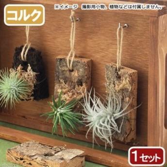 着生植物栽培セット コルクバージョン チランジア エアープランツ 着生ラン