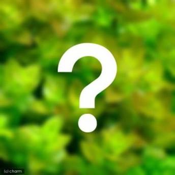 (水草)おまかせバコパ(水上葉) 2種×5本セット(無農薬)(計10本) 熱帯魚