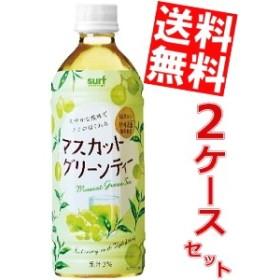 【送料無料】サーフビバレッジ マスカットグリーンティー 500mlペットボトル 48本 (24本×2ケース)big_dr