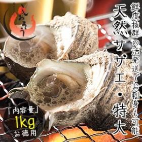サザエ さざえ 特大サイズ 1kg 天然 活 (1粒110g以上/約7~8粒)福井県産 BBQ 海鮮 バーベキュー[冷蔵商品以外とは同梱不可]