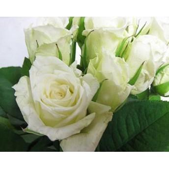 バラホワイト(ティネケ(Wなど5本 切花 生け花 花材 ドライフラワーに最適