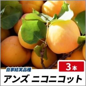 杏(アンズ) ニコニコット 樹高80cm前後 3本セット 果樹