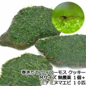 (エビ)(水草)巻きたて ウィローモス クッキー Mサイズ(無農薬)(1個)+ミナミヌマエビ(10匹) 北海道・九州航空便要保温