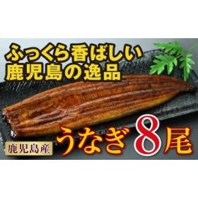 鹿児島産 特上うなぎ155g×8尾!