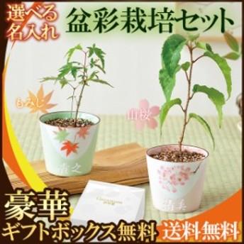 名入れ 盆栽 栽培セット プレゼント 桜 紅葉 父 母 誕生日プレゼント 祖父 祖母 名前入り 敬老の日 ギフト 還暦祝い