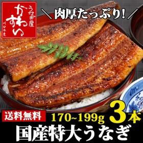 特大 国産 うなぎ 蒲焼き 170g×3本セット 鰻 ウナギ