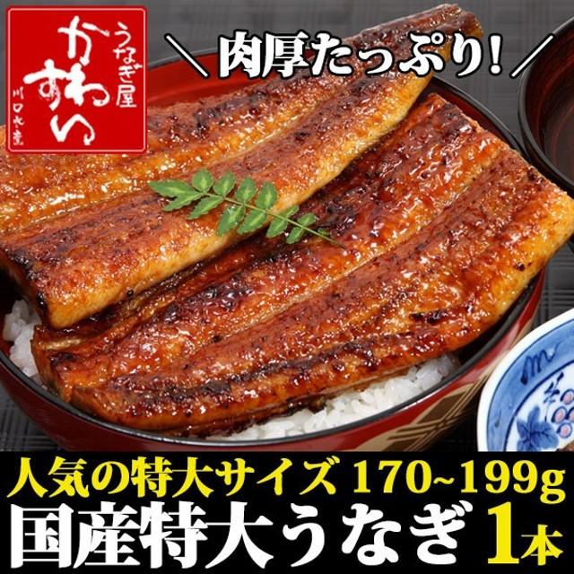 国産 特大 うなぎ 蒲焼き 170g-199g×1本