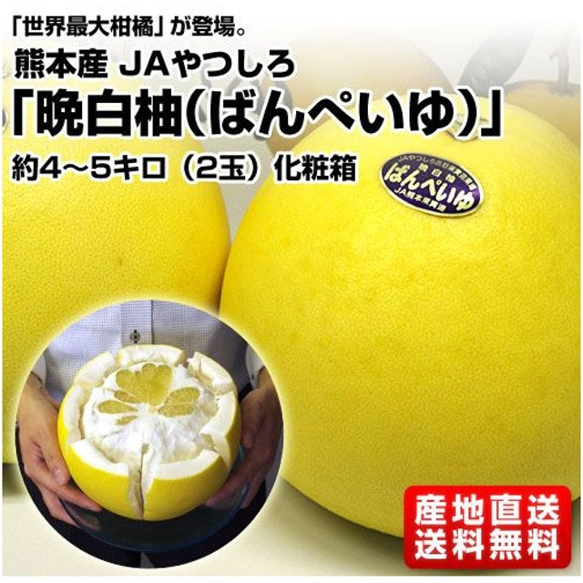 熊本産JAやつしろ 晩白柚 2玉 4から5kg