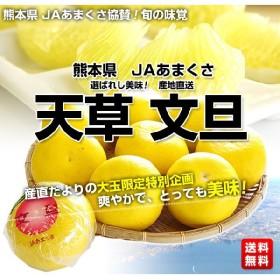 送料無料 熊本県 JAあまくさ産 天草文旦 約5キロ 7から10玉 ぶんたん ブンタン
