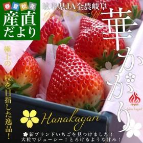 岐阜県より産地直送 JAぎふ 新品種いちご「華かがり」 400g化粧箱(9から15粒) ※クール便発送