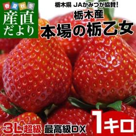 送料無料 栃木県より産地直送 JAかみつが 栃乙女いちご DX 1キロ(12から15粒×2P) いちご イチゴ 苺