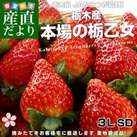 送料無料 栃木県より産地直送 JAかみつが 栃乙女いちご SD 大粒の3L 約320g×2パック(12から15粒×2P)いちご イチゴ 苺