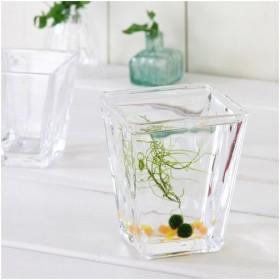 ガラスベース スクエアグラス L エアプランツ 多肉植物 ティランジア ガラス 関東当日便