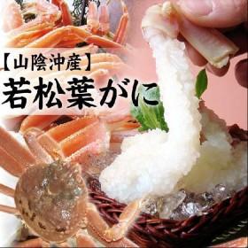 (かに カニ 蟹)若松葉ガニ[足折れ混じり][活生]3枚セット(3枚で1-1.5kg程度)送料無料 若松葉がに