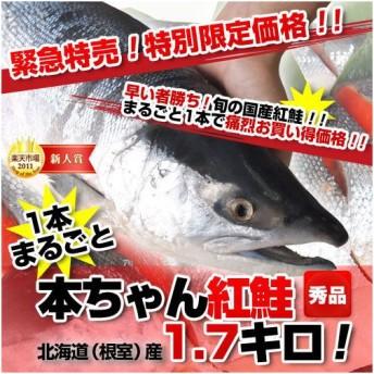 北海道(根室)産 本ちゃん 紅鮭1本まるごと 1.7キロ!