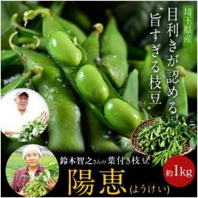 埼玉県産 鈴木智之さんの葉つき枝豆「陽恵(ようけい)」 約350g×3袋(さやの重量で合計約1kgになるようにお詰めします。)☆
