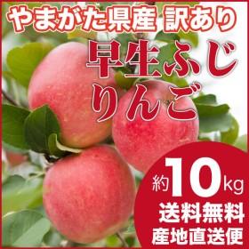 りんご 訳あり 早生ふじ 10キロ ご家庭用 山形県産 産地直送 林檎 リンゴ 10kg