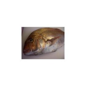 【送料無料】厳選紀州うめ真鯛1尾(2kg前後)養殖【マダイ】【真鯛】