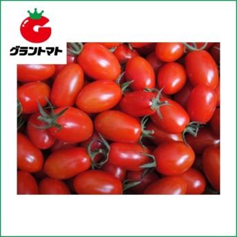 アイコ ミニトマト 1000粒 野菜種子【取寄商品】