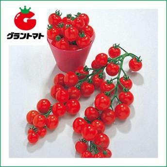 ミニキャロル ミニトマト 5ml 野菜種子【取寄商品】