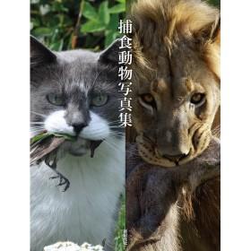 捕食動物写真集/新紀元社