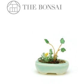 完成品 盆栽ミニチュア 1/12スケール THE BONSAI ザ・盆栽 小判鉢寄せ植え 水色