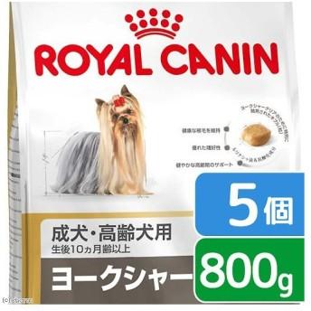 ロイヤルカナン ヨークシャーテリア 成犬・高齢犬用 800g×5袋 ジップ付