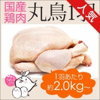 丸鶏 丸鳥 中抜き 1羽 紀州うめどり 約2kg~(3-6人前) ローストチキン BBQに 鶏肉 国産