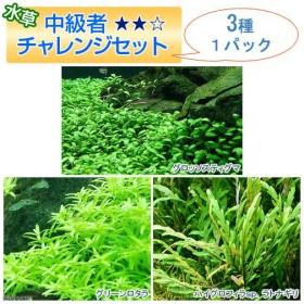 (水草)中級者チャレンジセット 3種(1パック) 熱帯魚 北海道航空便要保温